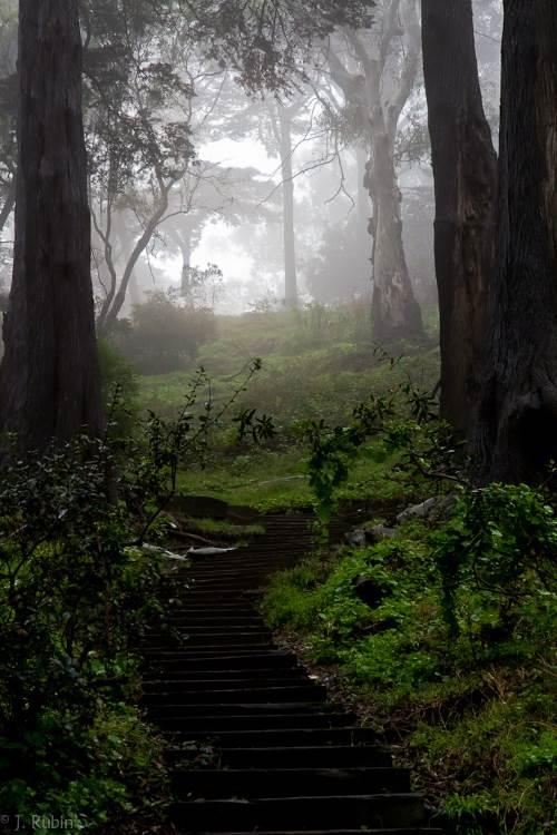 Haunted Hiking Trail in Buena Vista Park San Francisco 2