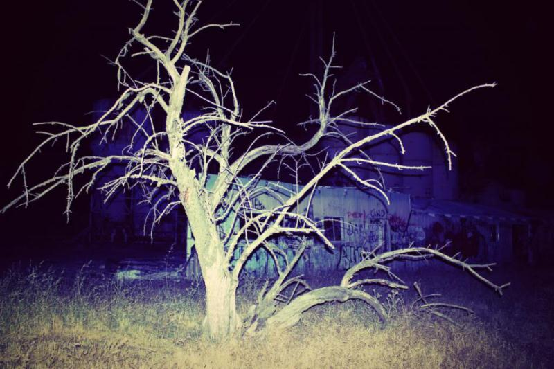 The Antioch Gates of Hell Creepy Tree