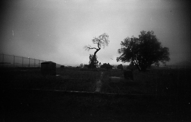 Creepy Trees at Haunted Agua Mansa Cemetery in Colton California