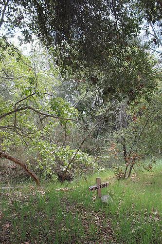 Winstons Grave in Elfin Forest
