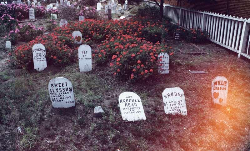 The Heartbreaking Haunting of the Presidio Pet Cemetery