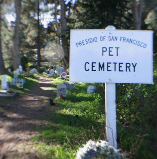 Ghost sightings are common at the haunted pet cemetery in the San Francisco Presidio