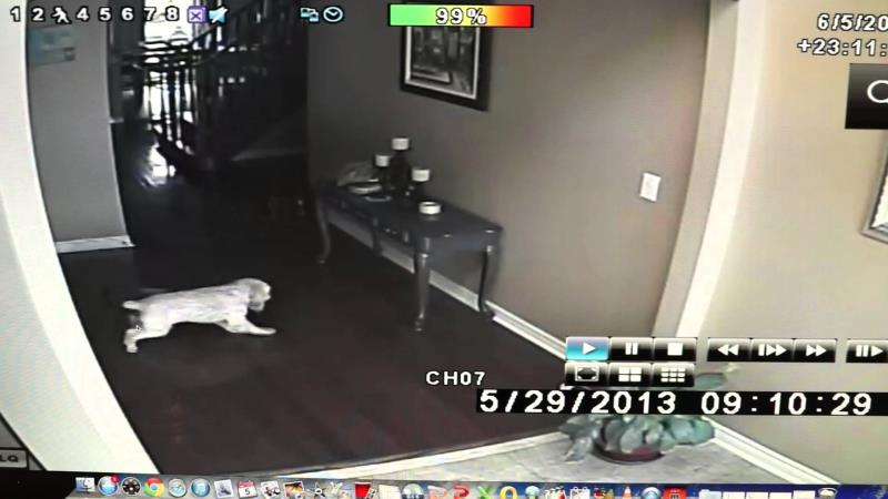 Dog Attacked by Ghost in Haunted House?