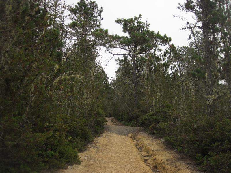 Pygmy Forest Trail, Salt Point State Park