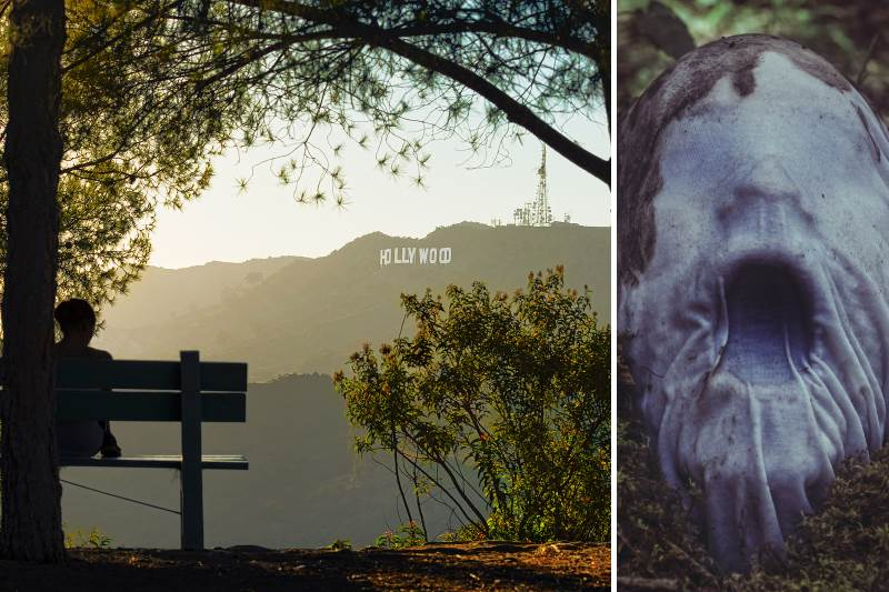 Paranormal Activity At Griffith Park