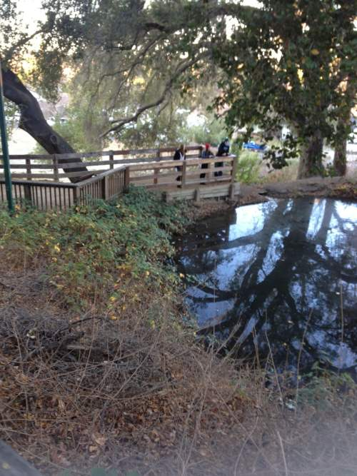 Beware the ghost of Dottie's Pond In San Jose, Ca...