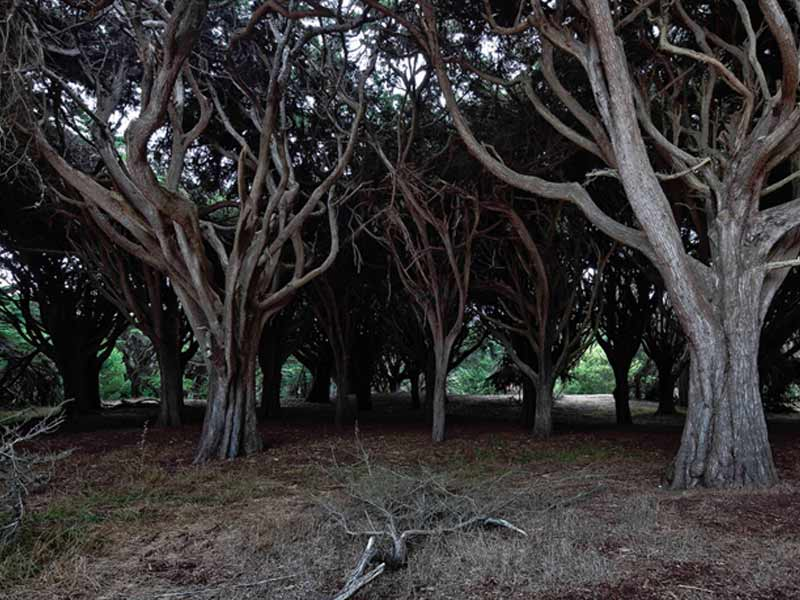 You'll get a weird, cold feeling as you walk near some of the trees at Presidio Park.