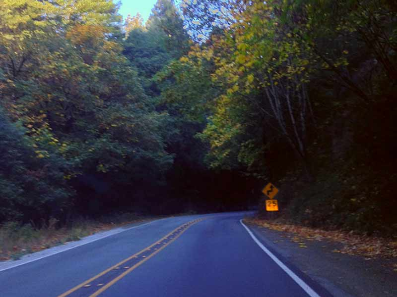 "There's just something ""off"" feeling about when the road twists and turns into the trees."