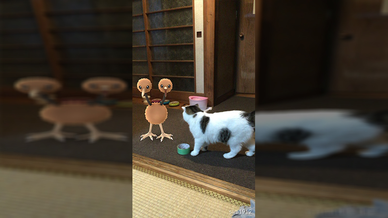 Pets Are Helping Prove These Paranormal Theories about Pokemon Go