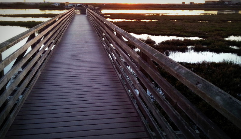 The trails at Bolsa China include many board walks that go over wetlands. Fish have been mistaken for ghosts here, or was it the other way around?