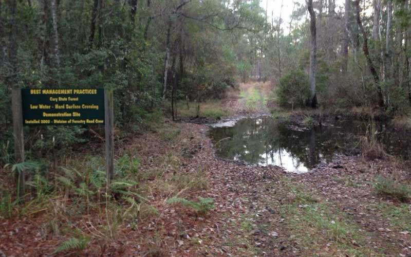 The Cary State Forest in Florida is one of the most haunted locations in all of Bryceville.