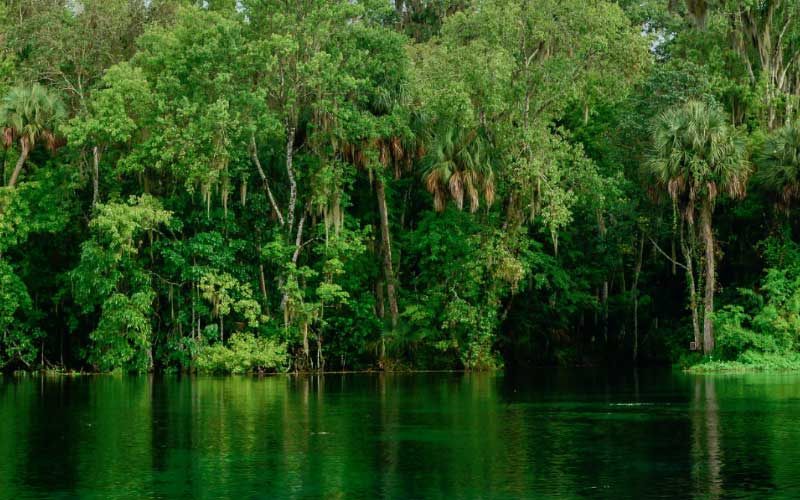 The Ocala National Forest In Florida Is Known As A Very Haunted Place, And  Not