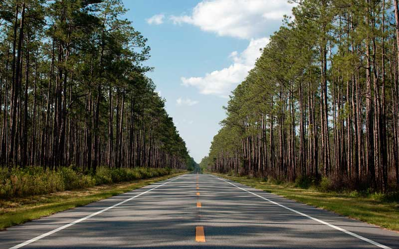 Tate's Hell State Forest in Carrabelle is absurdly haunted, just ask the ghosts.