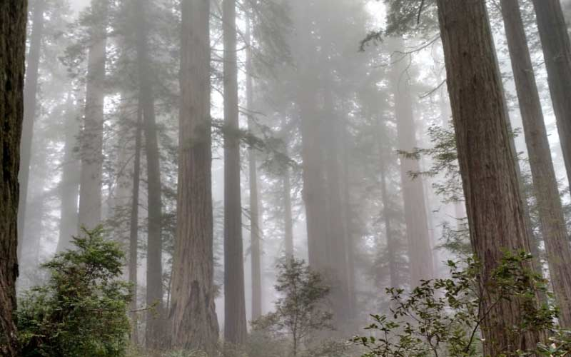 Redwood National Forest is old, beautiful, scenic, and haunted. One of California's best places for a spooky evening.