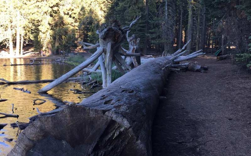 Lassen National Forest in Hat Creek, California doesn't have the same grandeur as Redwood, but it does have just as much paranormal activity.