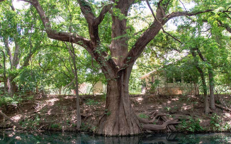 There's an exceptionally haunted creek in Wimberley, Texas.
