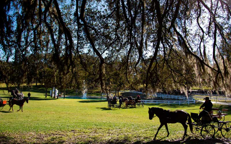 The Grand Oaks Resort is said to be haunted by horses who have lost their lives.