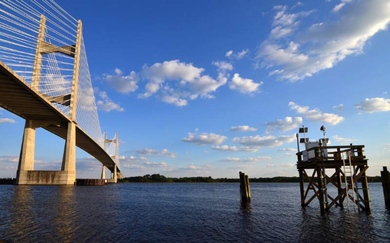 Dames Point Bridge in Jacksonville Florida has many cars passing by, and most of them have no idea what lurks below.