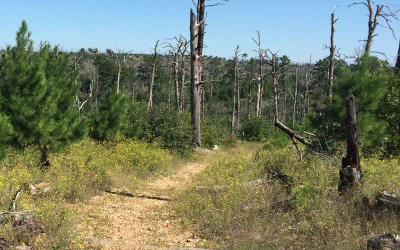 Bastrop State Park has trails that get more and more haunted the longer you can stick around. Very, very haunted place.