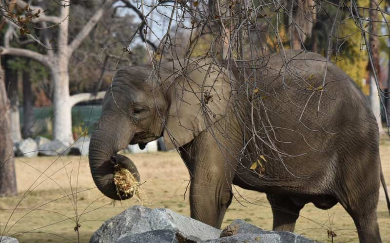 The Chaffee Zoo in Fresno is home to many animals, both living and deceased.
