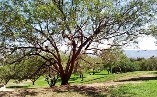 Spend an afternoon in this beautiful memorial park in El Paso, if you don't mind feeling a paranormal presence looking over you.