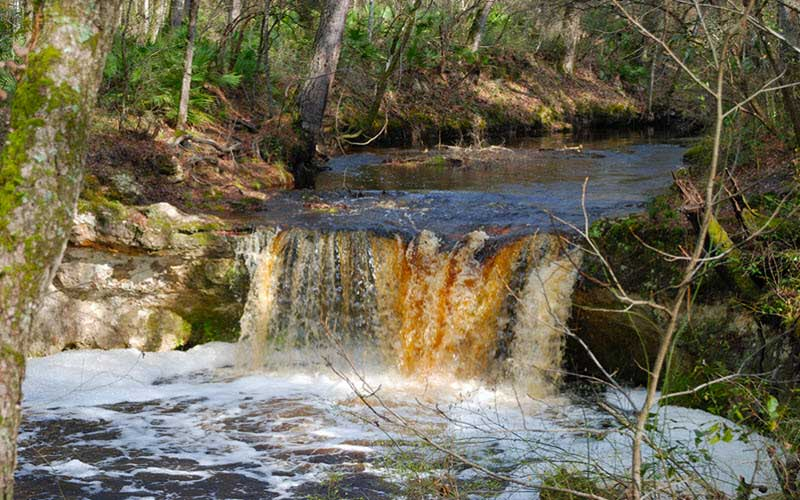 Camp Branch Conservation Area – White Springs