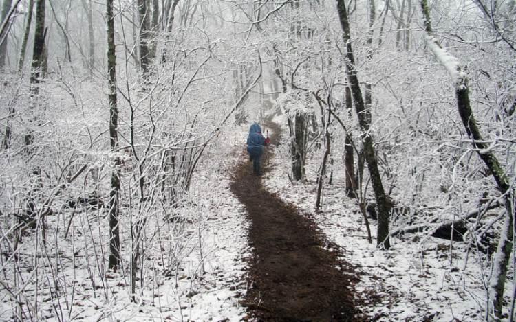 Thru-hiking the North Carolina section of the Appalachian Trail