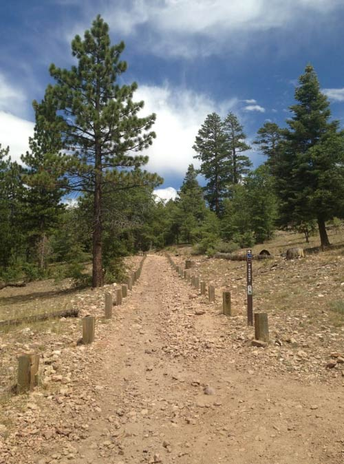 Pine Knot Trail at Big Bear Lake is relaxing, and extremely haunted if you're sensitive to that sort of thing.