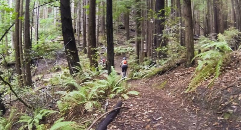 Manly Gulch Trail in Mendocino has generations of spirits who can't seem to find peace.