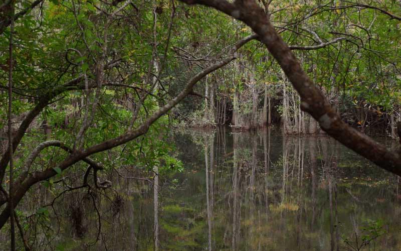 Blackwater River State Park – Holt