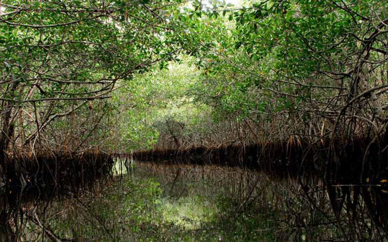 Everglades National Park - Everglades City
