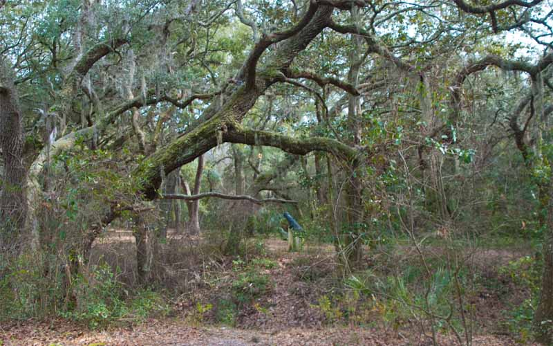 Yellow Bluff Fort Historic State Park – Jacksonville