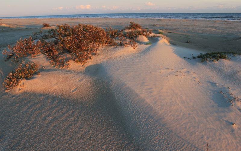 Galveston Island State Park – Galveston