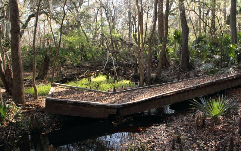 Does An Angry Bigfoot Actually Live At This Florida State Park?