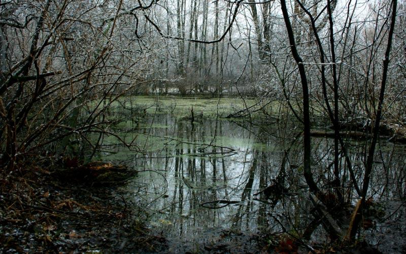 Take a walk near this California creek.