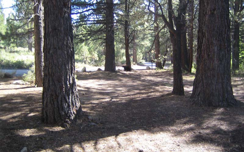 Sherwin Creek Campground in Mammoth Lakes, California