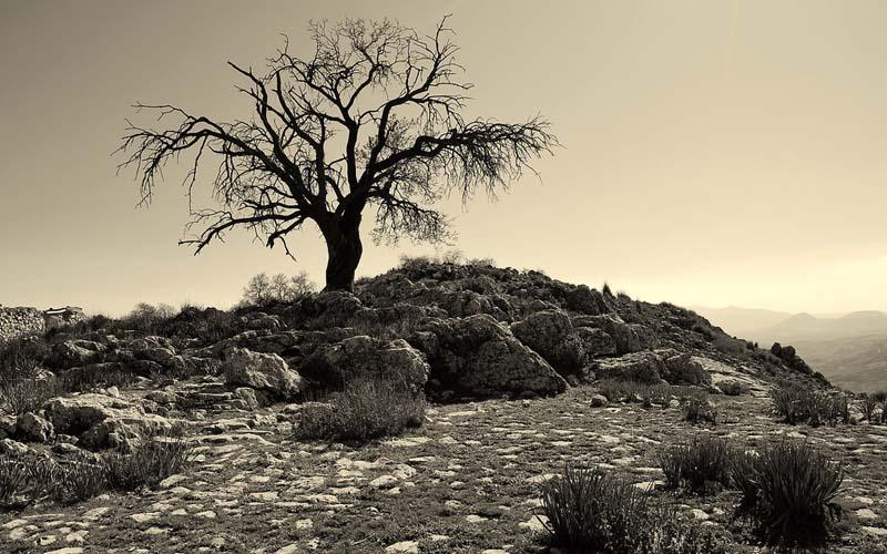 Beware The Peril Of This Secret Amarillo Devil Tree