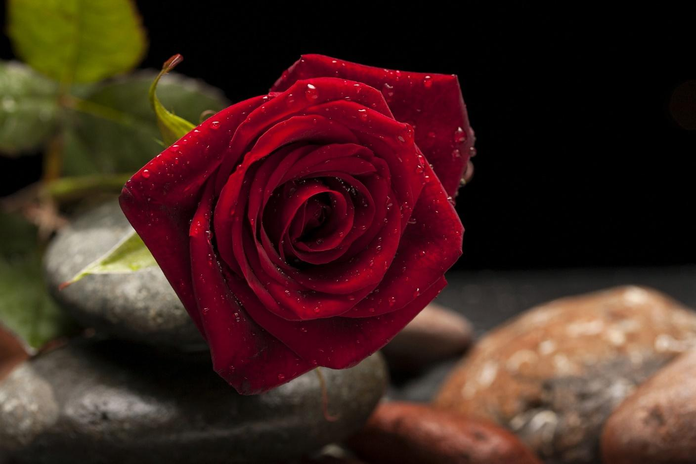 Fill your house with positivity and love using rose petals.