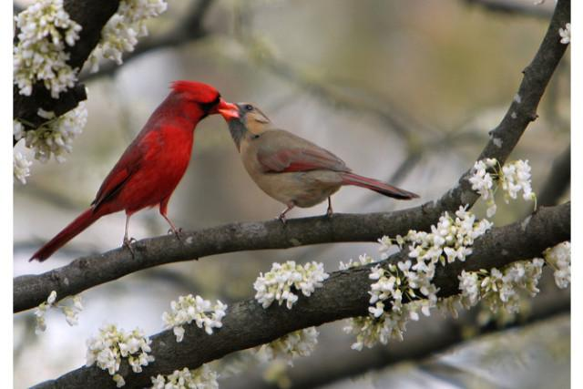 Seeing a cardinal in your dream could signal good fortune to come.
