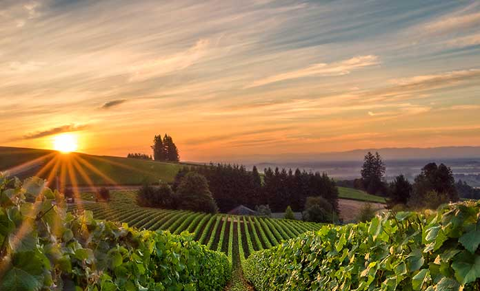 Columbia River Gorge & Willamette Valley Bike Tours