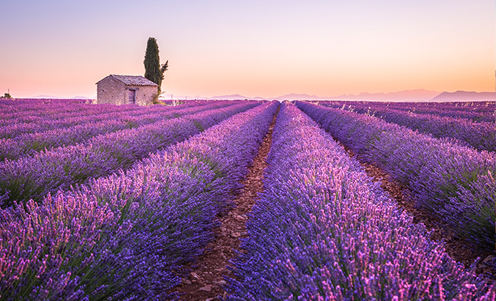 Provence trips
