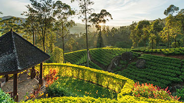 Ceylon Tea Trails, Sri Lanka