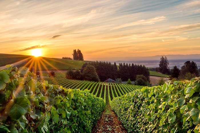 Columbia River Gorge & Willamette Valley Bike Tour