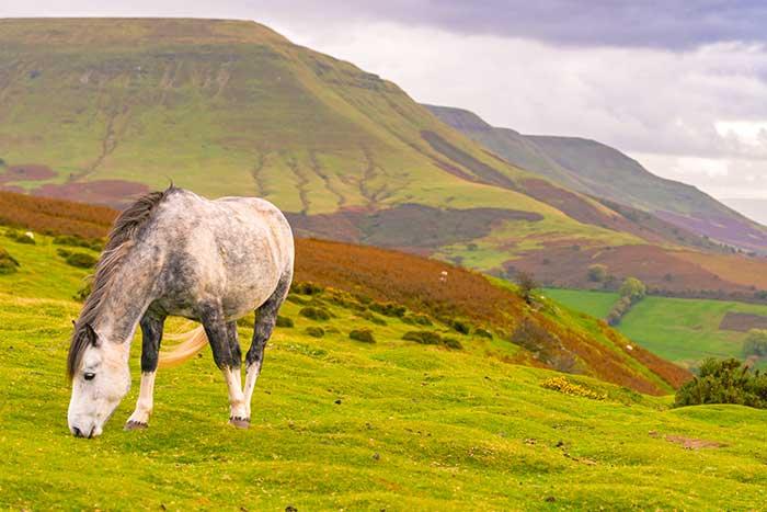 Wales Family Walking & Hiking Tour