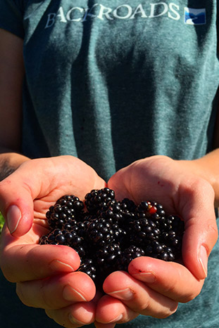 Wild berries in the hands of a Backroads guest - Backroads Vancouver & Salt Spring Islands Bike Tour