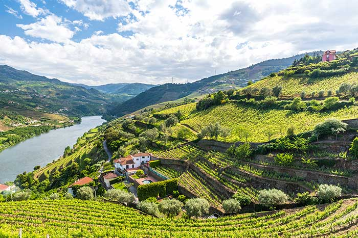 Hillside Vineyards above Portugal's Douro River