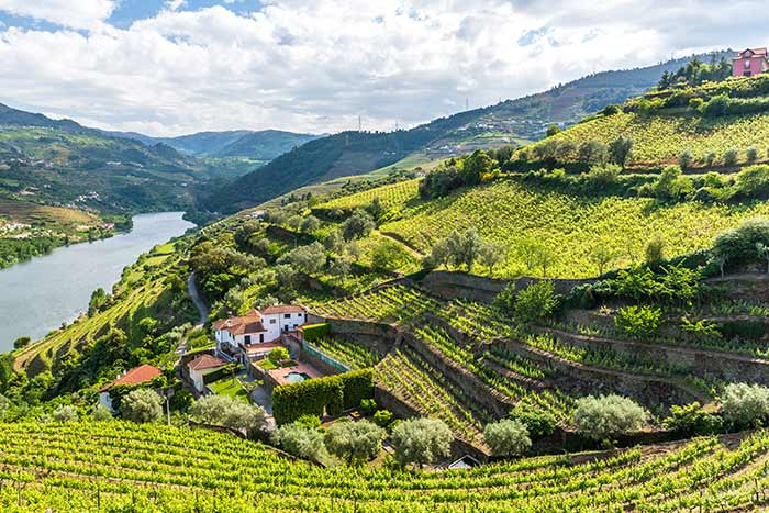 Hillside Vineyards along the Douro River, Portugal