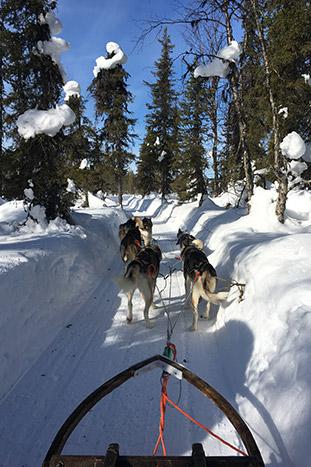 Dog Sledding - Backroads Finland & Sweden Northern Lights Multi-Adventure Tour