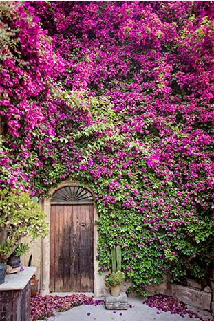 Ivy and Flower covered wall in a Sicilian Village, Italy