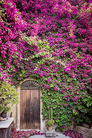 Ivy covered wall in a Sicilian Village, Italy